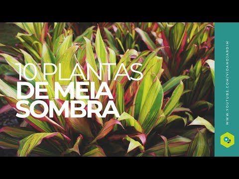 10-plantas-diversas-2-2603815