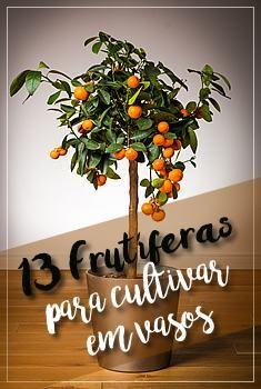 13-plantas-frutiferas-em-vaso-3-8454628