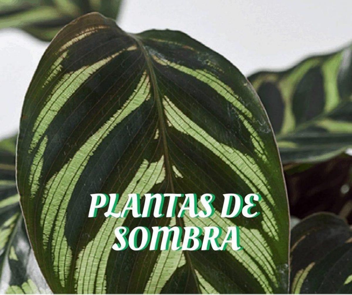 20-plantas-de-sombra-3-6610995