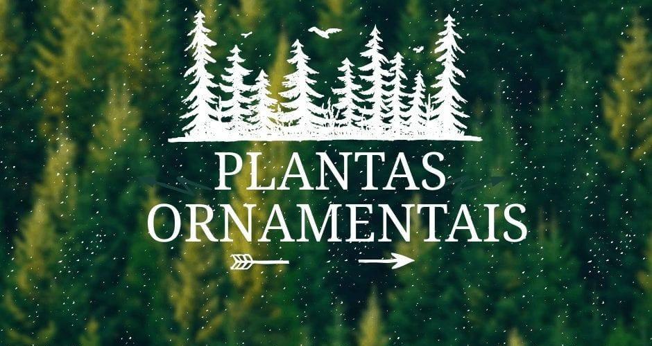 20-plantas-ornamentais-etapa-6-2-5867012