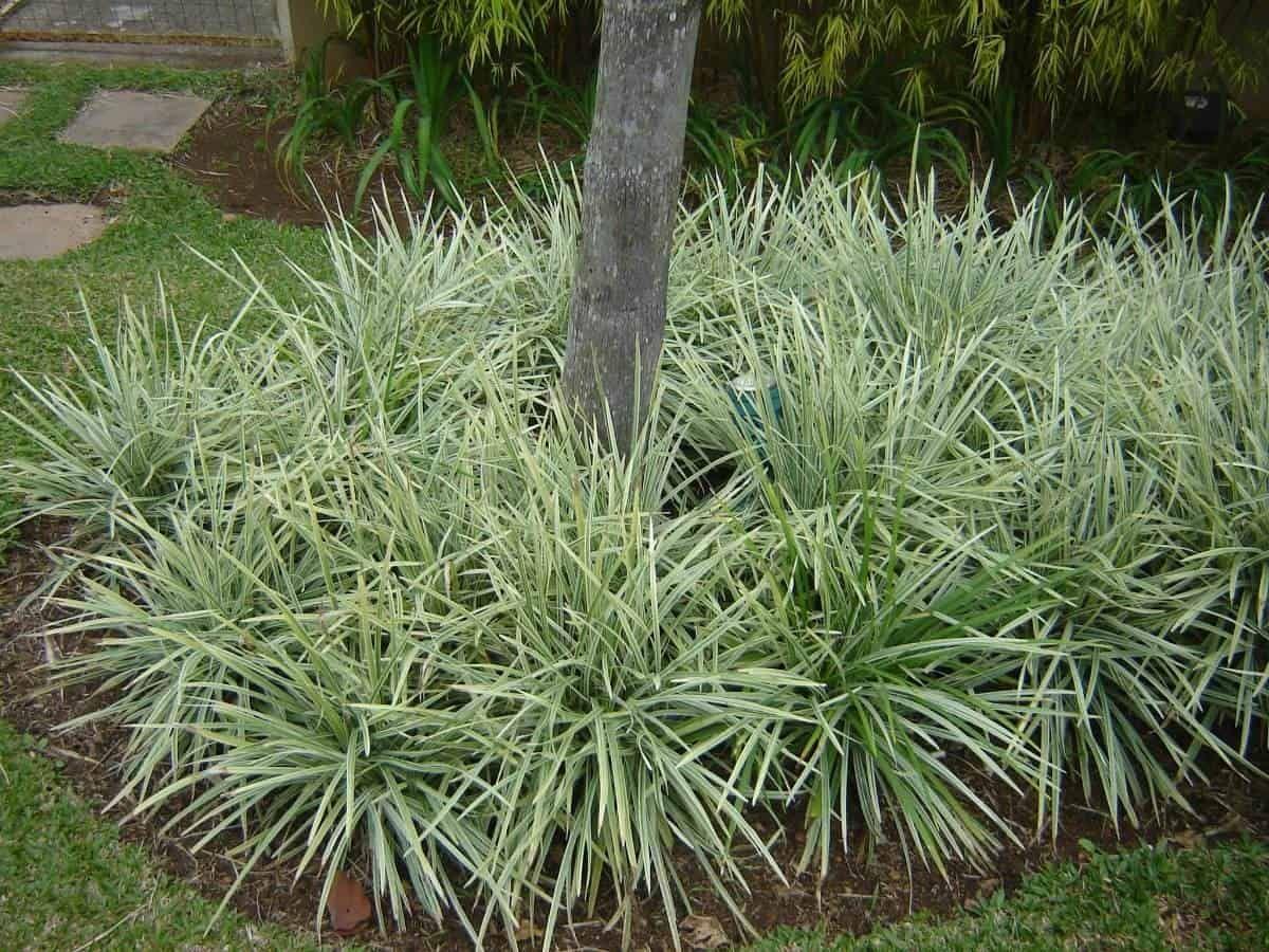 20-plantas-ornamentais-etapa-7-2-2358362