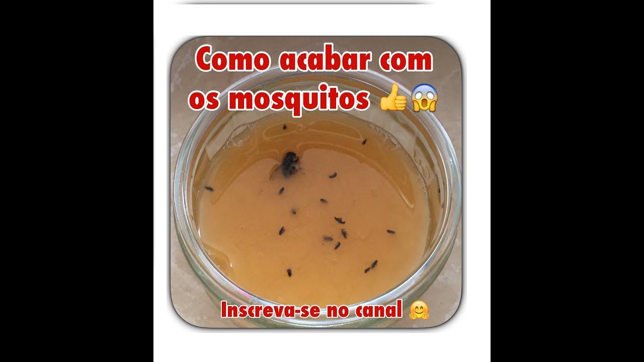 como-acabar-com-mosquitos-3-3208457