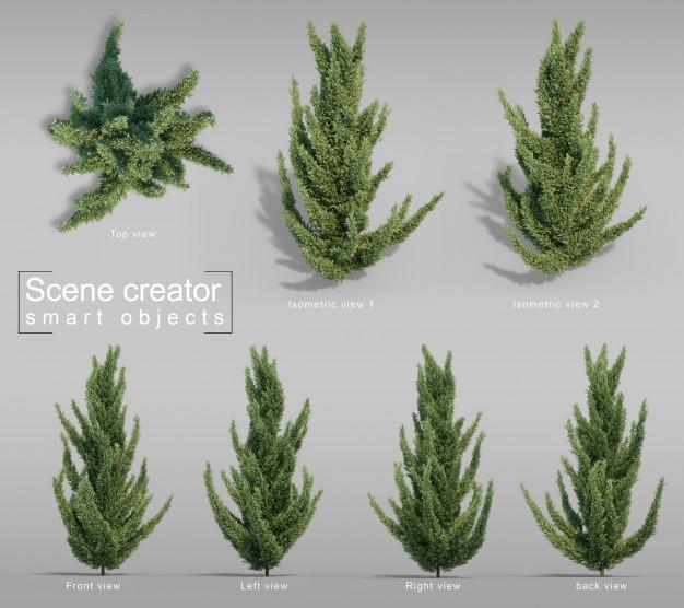 20 plantas perenes