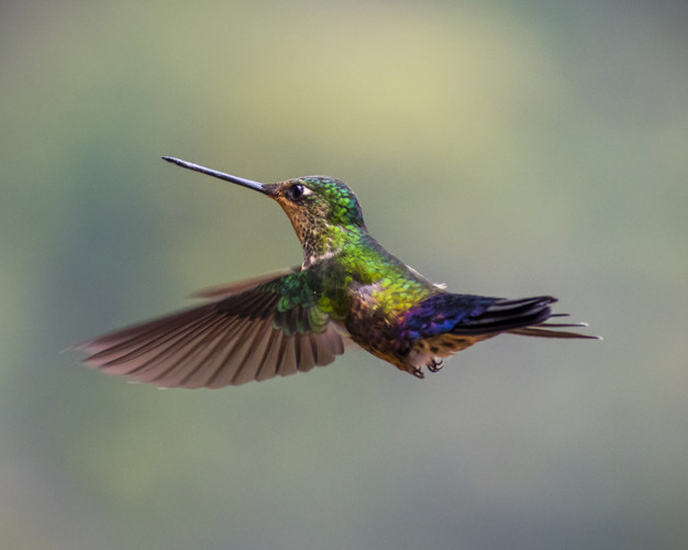 humming bird green flying 102855 7