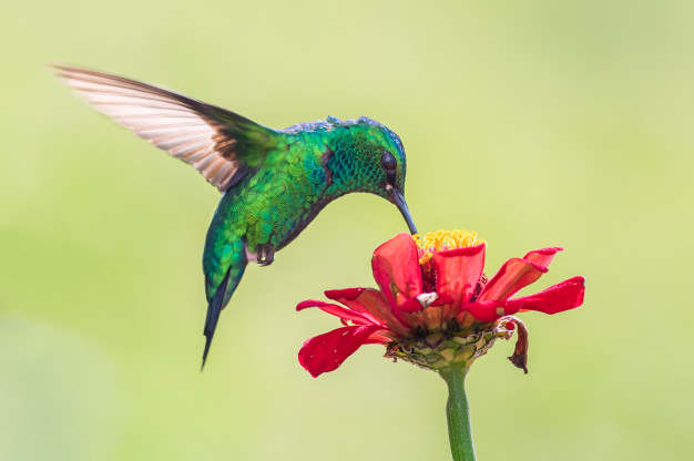 Bebedouro para beija-flor