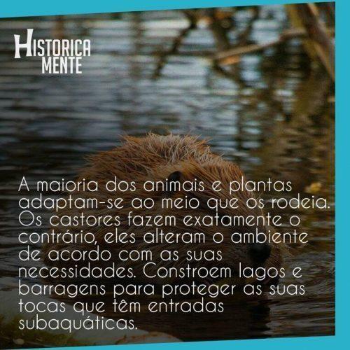 curiosidades-do-mundo-animais-12-500x500-8707515-8091991-6029390