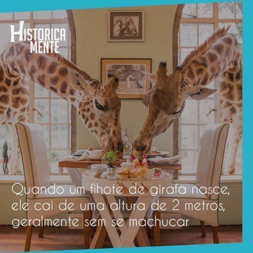 curiosidades-do-mundo-animais-32-500x500-8836580-1236394-6784234