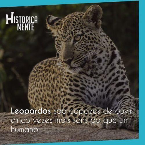 curiosidades-do-mundo-animais-56-500x500-5570562-9967328-4302320