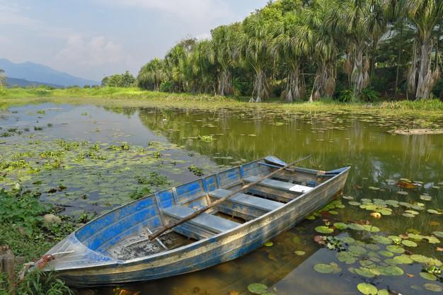 jangada flutuando sobre pantanal 261041 255